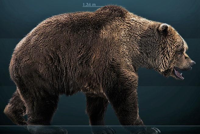 Restoration of the cave bear: Giant Prehistoric Bears