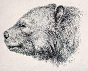 Arctotherium : Giant Prehistoric Bears