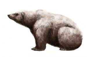 Ursus maritimus tyrannus.jpg