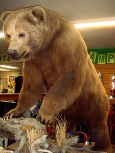 A Stuffed Kodiak Bear On Display In A Sports Shop