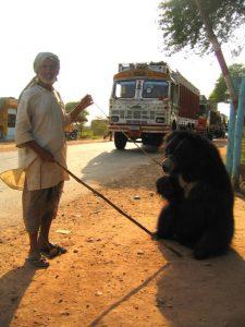 A Tame Sloth Bear And Its Handler
