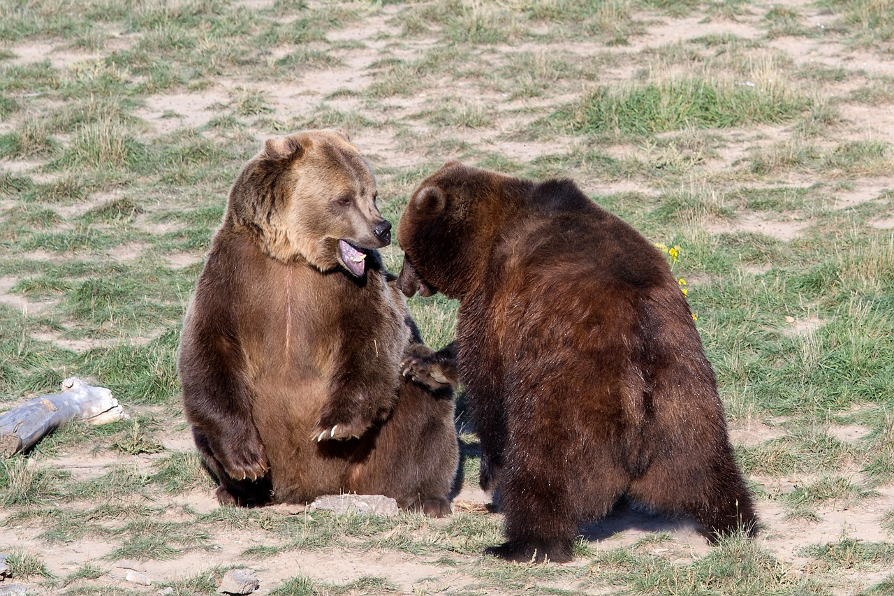 A Couple Of Grizzly Bears: Grizzly Bear Profile